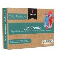 Lectii Montessori. Lectii de anatomie: Organe de simt. Sistemul respirator. Sistemul circulator