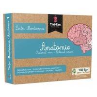 Lectii Montessori. Lectii de anatomie: Sistemul osos. Sistemul nervos
