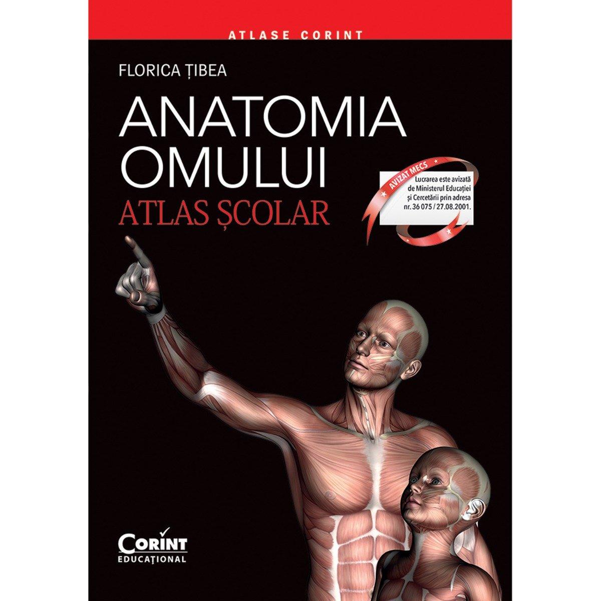 Carte Editura Corint, Atlas scolar anatomia omului - editie revizuita, Florica Tibea