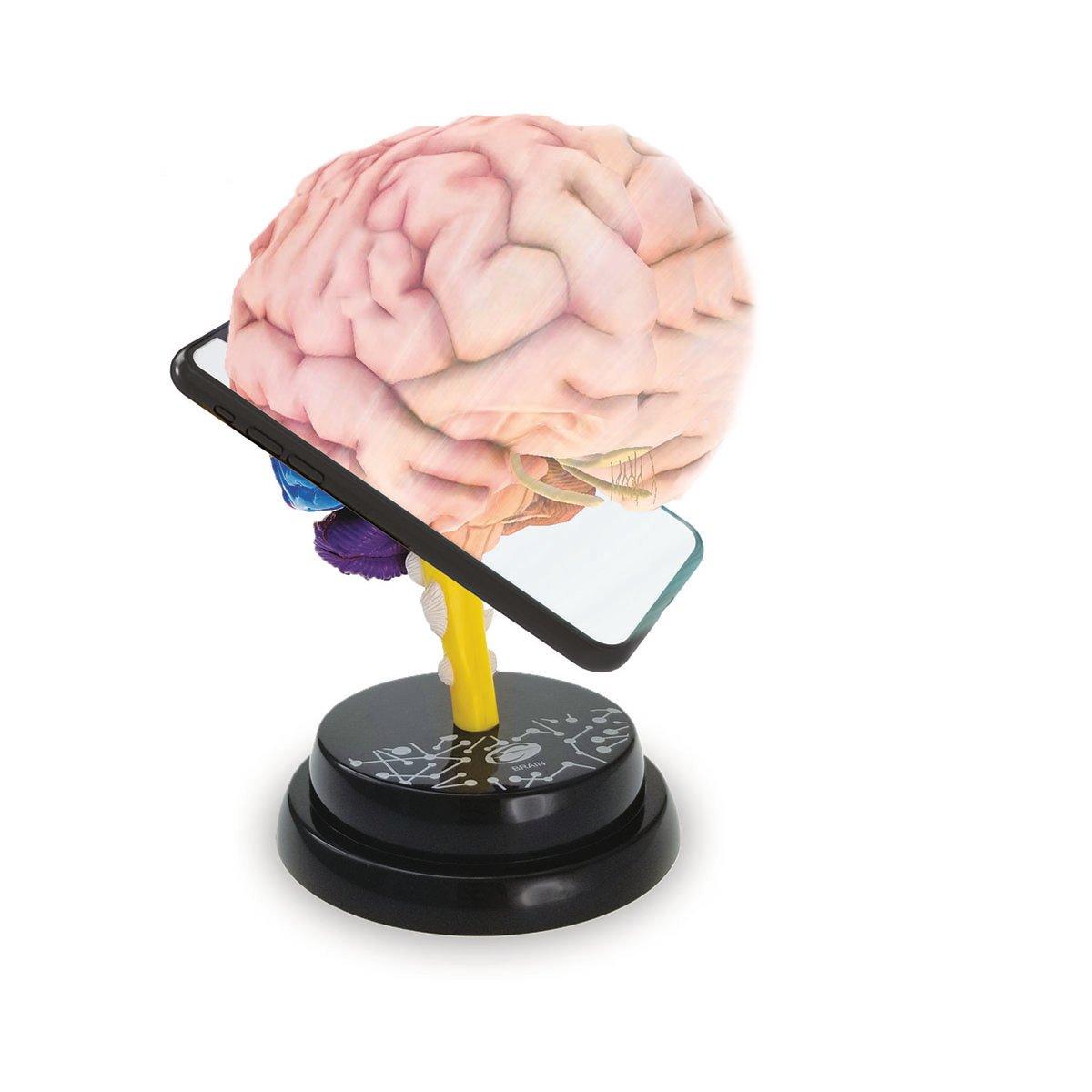 Macheta Anatomica De Asamblat Eastcolight, Creierul