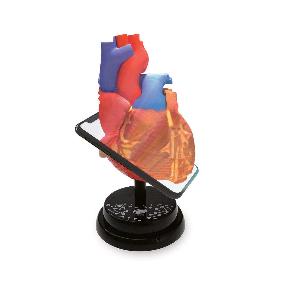 Macheta anatomica de asamblat Eastcolight, Inima