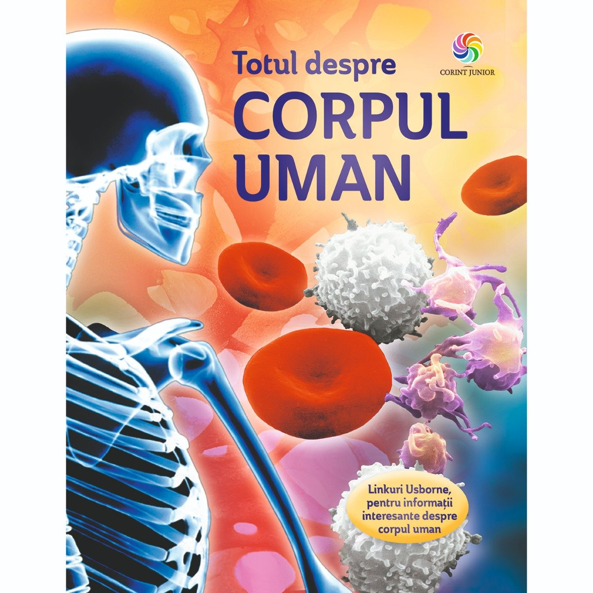 Carte Editura Corint, Totul despre corpul uman, Anna Claybourne